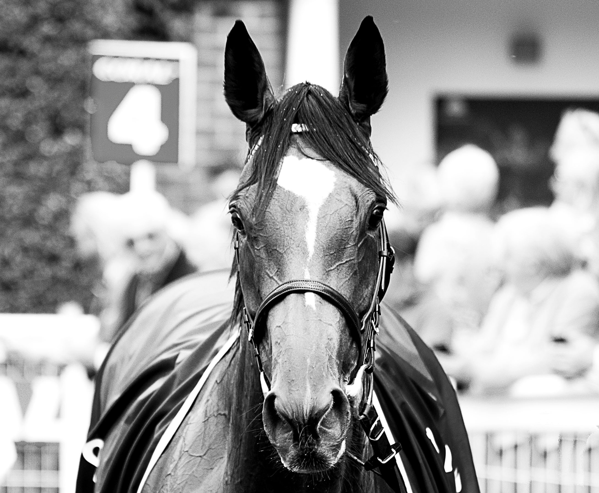 Rachel Groom Photography Enable Sandown Racecourse